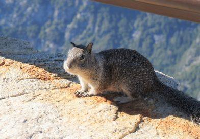 サンフランシスコに行くならヨセミテ国立公園まで足を延ばそう!(グレイシャーポイント編)