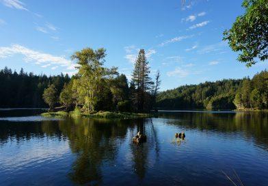 ネコリグに挑戦 ロックロモンド湖 (Loch Lomond Reservoir in California)
