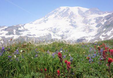 ハイキング in マウントレニエ国立公園 -その1 (Mt Rainier Washington)