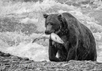 サーモン釣り道場 in カリフォルニア (Salmon Fishing Dojo in California)