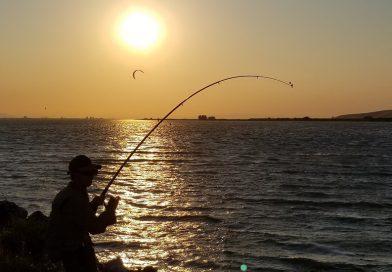 カリフォルニア・デルタでフィッシング。陸っぱりでチョウザメ Sturgeon は釣れるか? Fishing in Delta, California