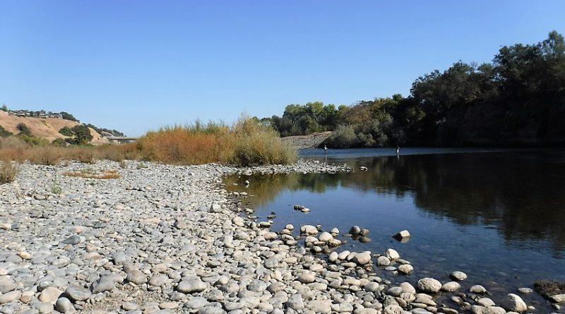 釣れない遡上サーモンに色々試す!Salmon Fishing in American RIver, California