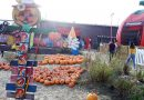 いよいよハロウィン!!パンプキンパッチに出かけよう!Halloween Pumpkin patch in Half Moon Bay, CA