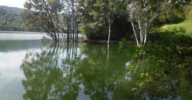 春のバス釣り。今度はレキシントン リザバー。Bass Fishing in Lexington Reservoir, California